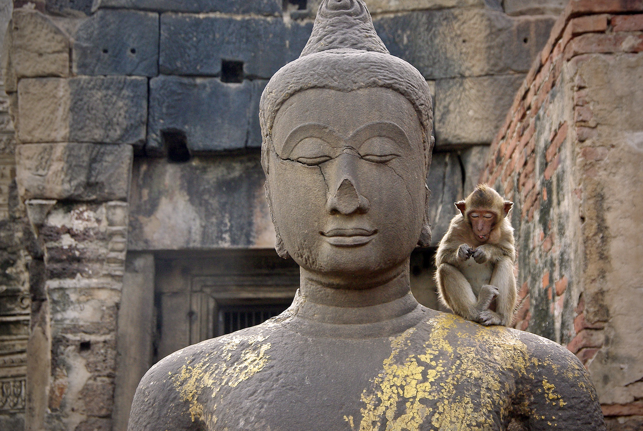 Singe bouddhiste