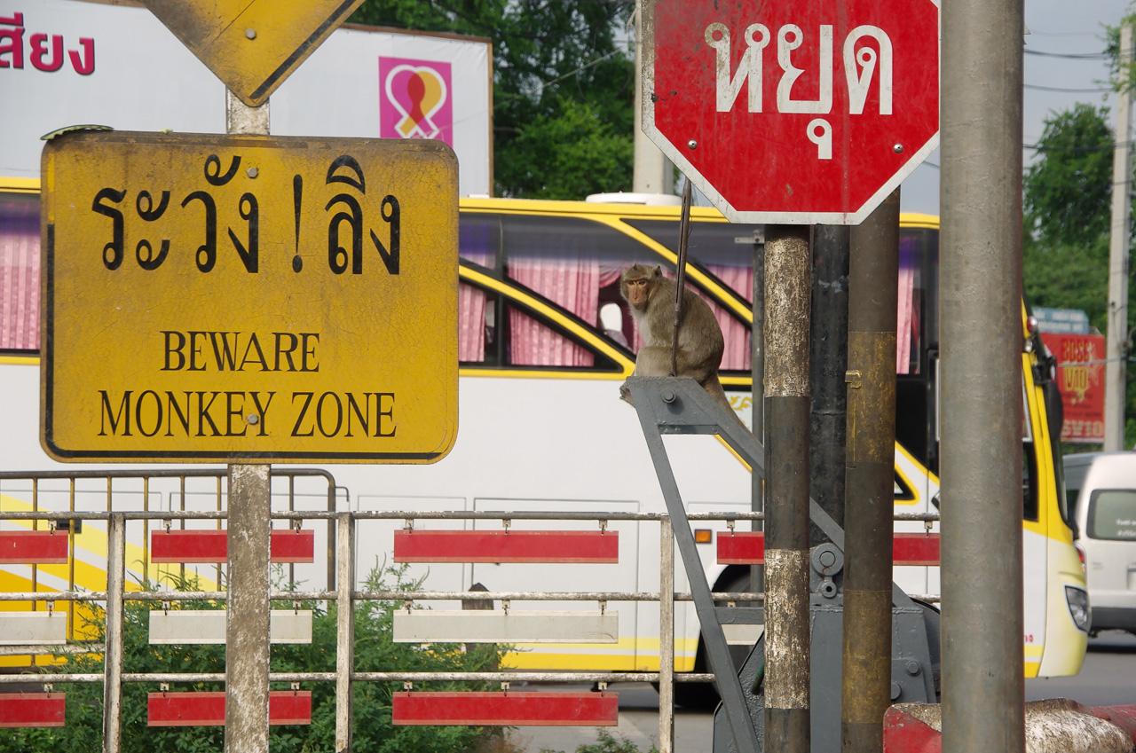 Monkey zone