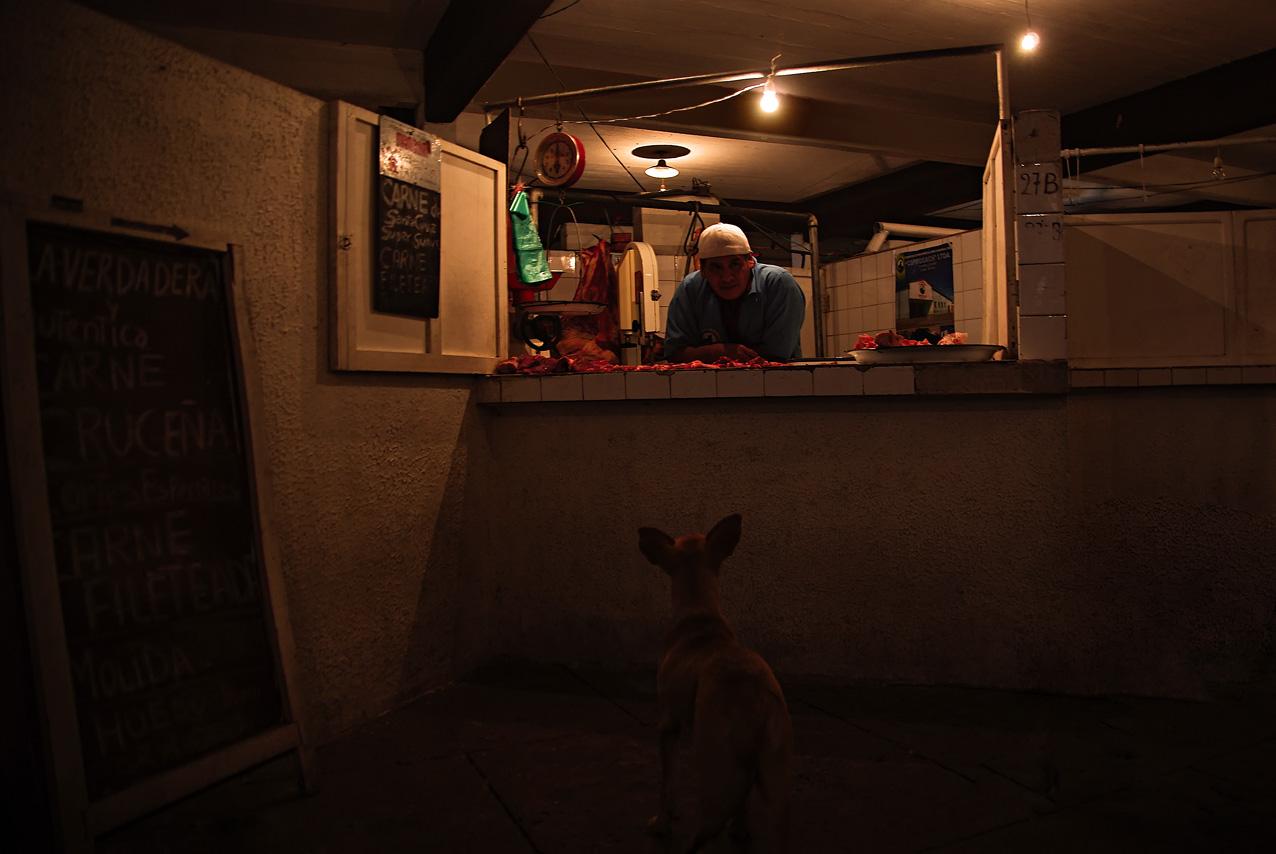 Le chien du boucher